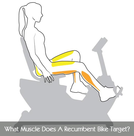 muscle groups exercise bike
