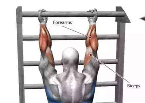 biceps workouts with no weights - Pull-ups