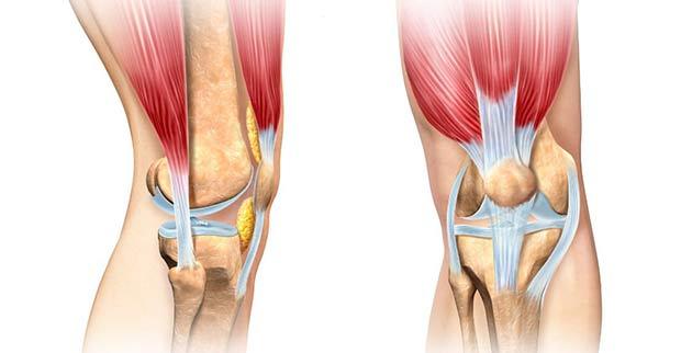 The anatomy of the knee